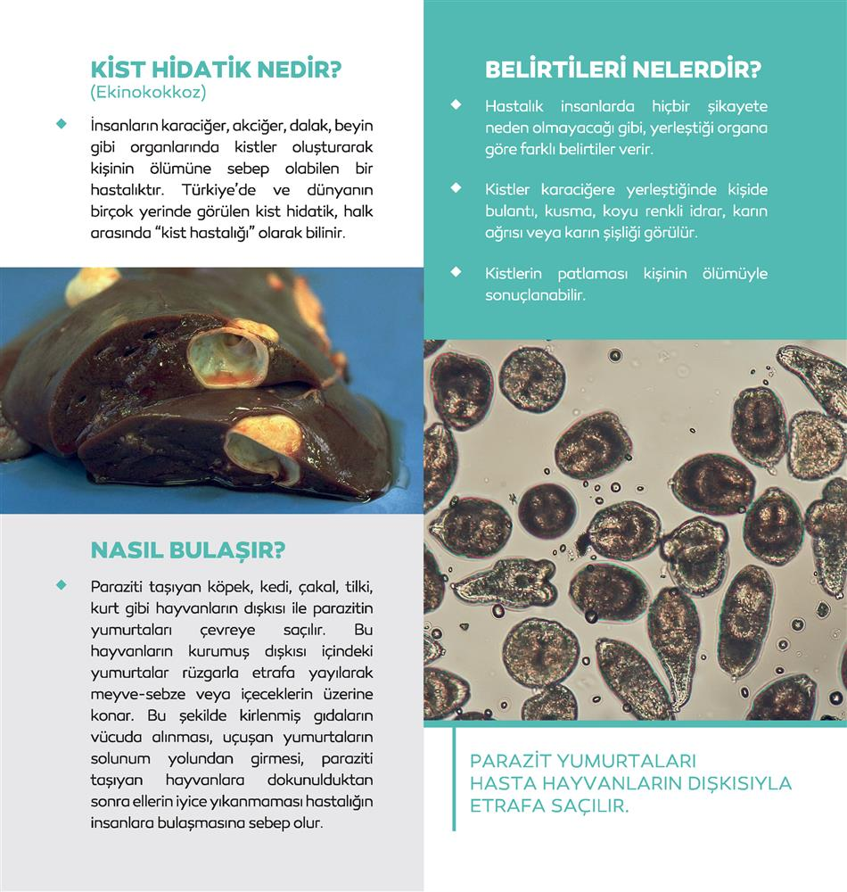 kisthidatikbrosur_Sayfa_2.png
