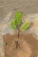 Geleceğe Nefes Ağaç Dikimi 11.11.2019 - 12.jpeg