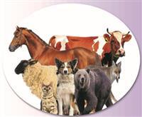 Kuduz Aşısı Uygulama Merkezleri
